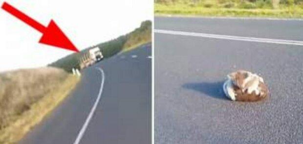 """Chlupatý klubíček se kutálel přímo vozovkou: """"Kolem se nosila auta, bylo nutné něco udělat"""""""