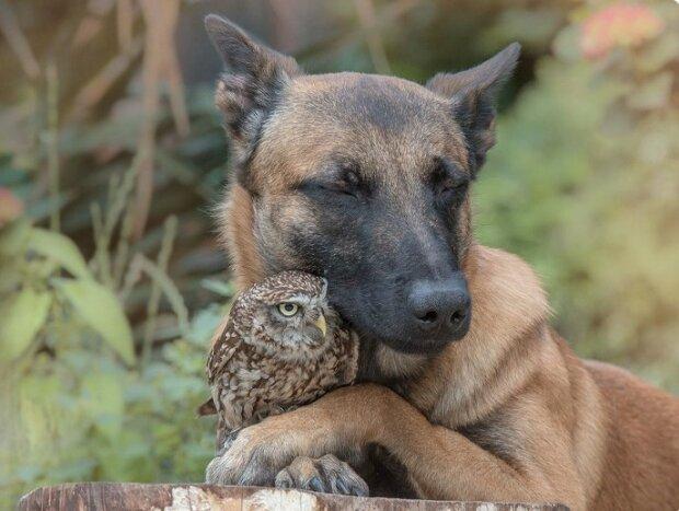 """""""Vzácný případ"""": neobvyklé přátelství mezi obrovským psem a malým ptákem"""