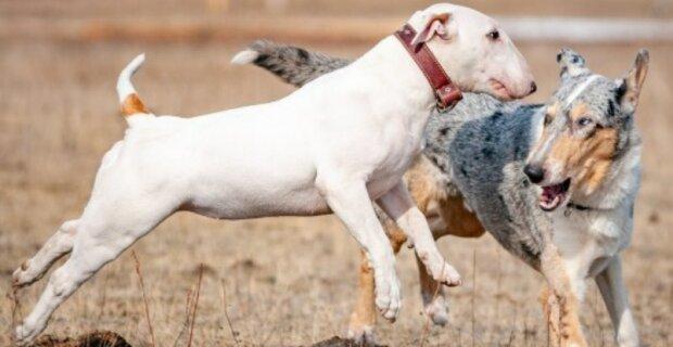 """""""Na co se díváš. Vezměte psa k veterináři, pak bude pozdě"""": ten chlap popadl psa a běžel"""