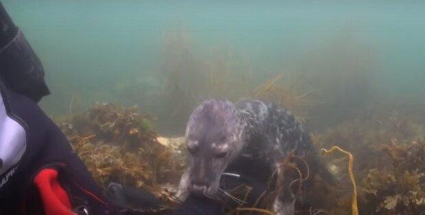 Tuleň připlul k potápěči a ukázal prackami co chce