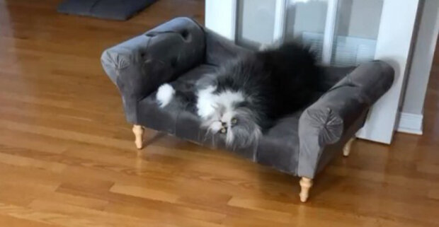 """Pravý """"kočkopes"""" žije v jedné rodině v Kanadě"""