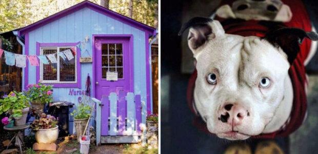 Žena postavila vesnici pro psy, ve které lidé chtějí žít