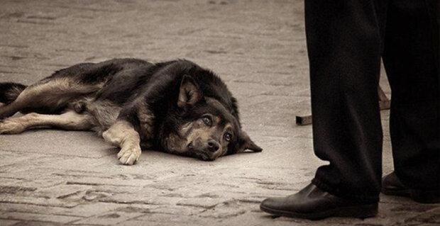 """""""Češi o tom ani nesnily"""": V Itálii jsou ti, kdo hodili zvíře na ulici, byly přísně potrestáni"""