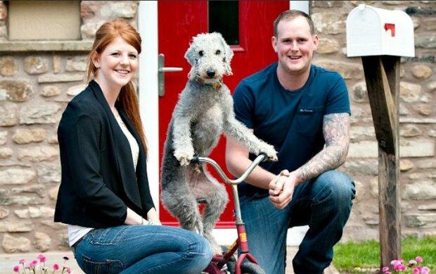 Barry je pes, který se naučil jezdit na tříkolce a nejen