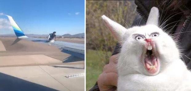 """""""Když chybělo dost místa u okna"""": Pilot uviděl na křídle dopravního letadla černého pasažéra"""
