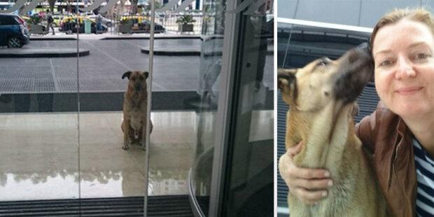"""Toulavý pes každý den čekal a letušku na stejném místě: """"Co mám s tebou dělat? Konečně bydlím v jiném městě"""""""