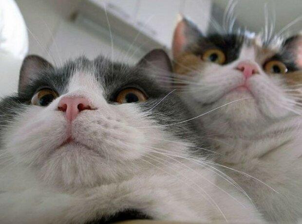 Zvědavé kočky, které odemkly notebook majitelů