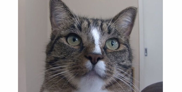 """""""Džidža je nejchytřejší kočka na světě"""": Do Guinessovy knihy se dostala kočka"""