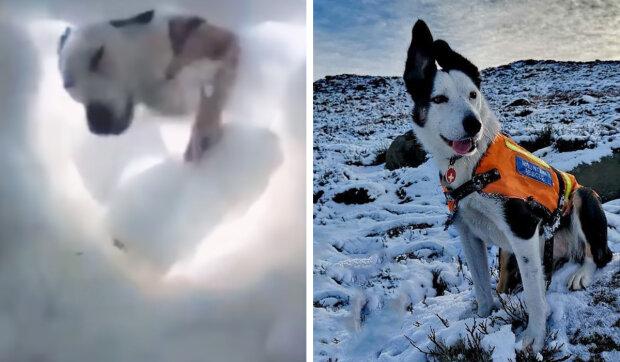 Zoufalý experiment se psem: instruktor se zakopal ve sněhu, aby zkontroloval, jak ho pes najde
