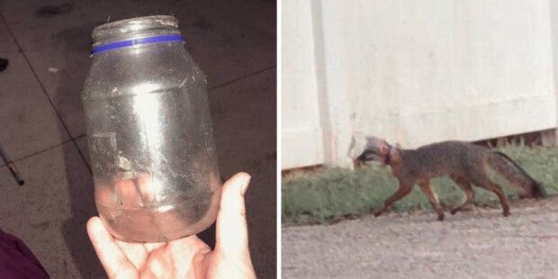 Hasič se pokusil zachránit lišku, která běžela s plechovkou na hlavě, screen  thedodo.com