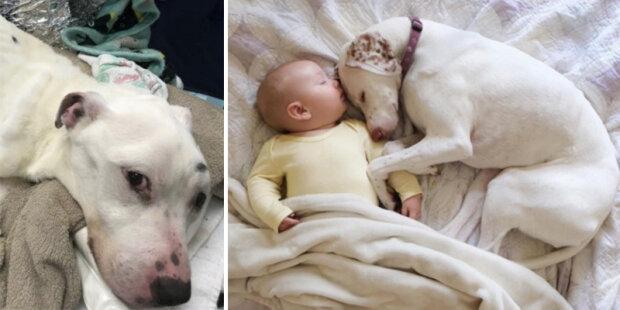 """""""Bál se všech, kromě něho"""": smutného psa se ujala rodina, a dítě mu pomohlo obnovit víru v lidi"""