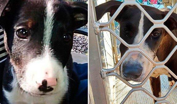Ztracený pes pět let čekal na setkání s majitelem