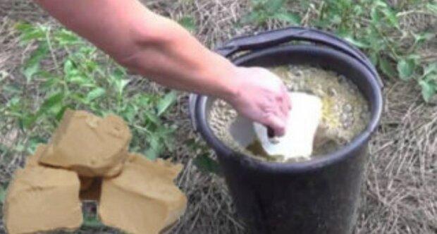 """""""Pokud rozpustit kvasnice a tímto zalit rostliny, sklizen bude výborná"""": rada hospodyňky, která otestovala to na vlastní zkušenosti"""