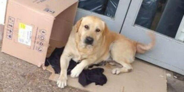 """""""Určitě se vrátí tady"""": Oddaný pes týden seděl u dveří nemocnice a čekal na svého majitele"""
