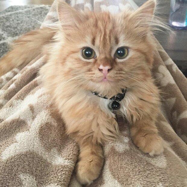 Poté, co bylo kotě vzato z útulku se neustále usmívá: podrobnosti