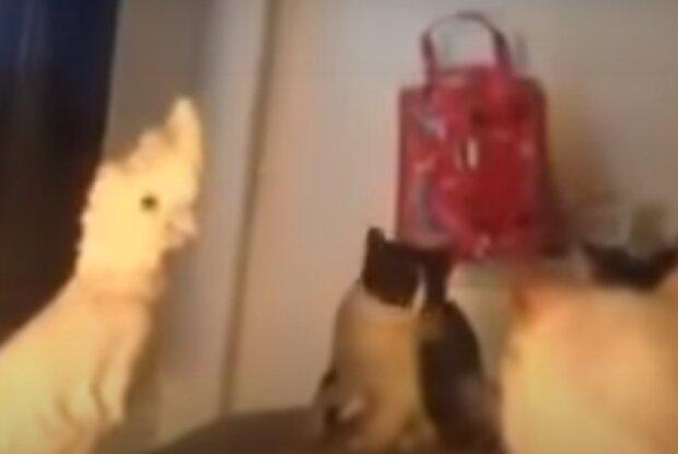 Papoušek a kočky. Foto: snímek obrazovky YouTube